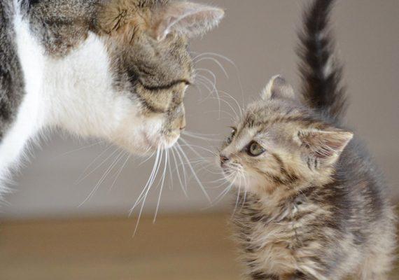 Hauskatzen in der Wohnung richtig halten